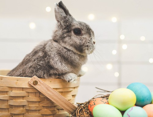 Competition – Some Bunny will be hopping happy this Easter